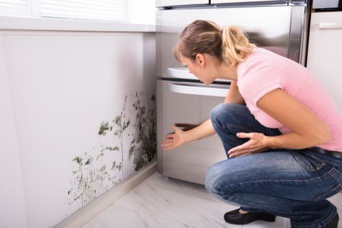 Mold Remediation Raleigh