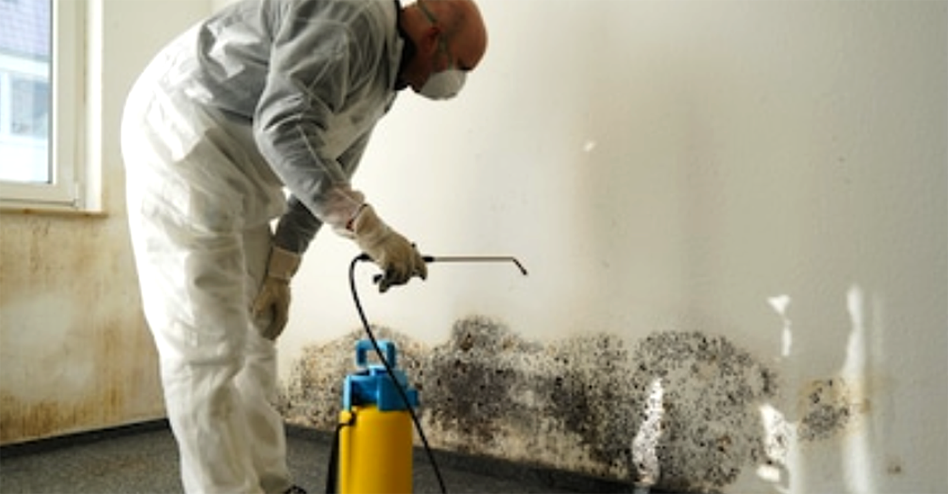 Mold Remediation In Baltimore